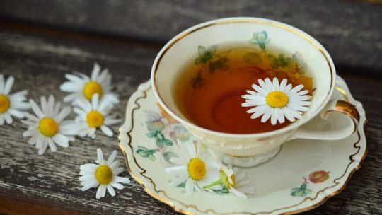 Les bienfaits du thé sur l'organisme