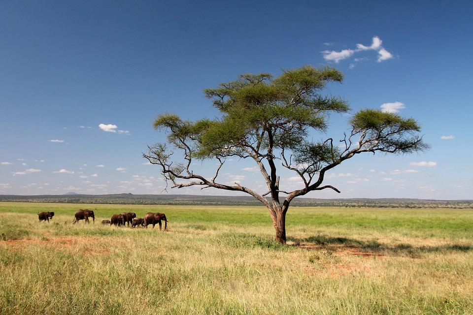 Le circuit de safari du nord de la Tanzanie : le Serengeti et le Ngorongoro